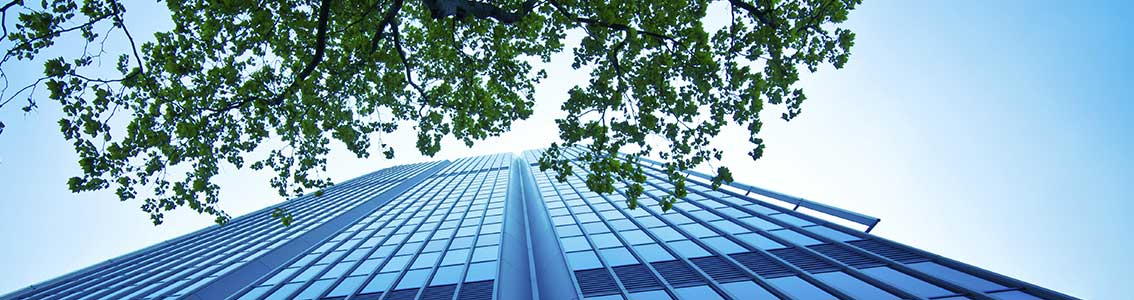 Skyscraper and green leaves seen from below